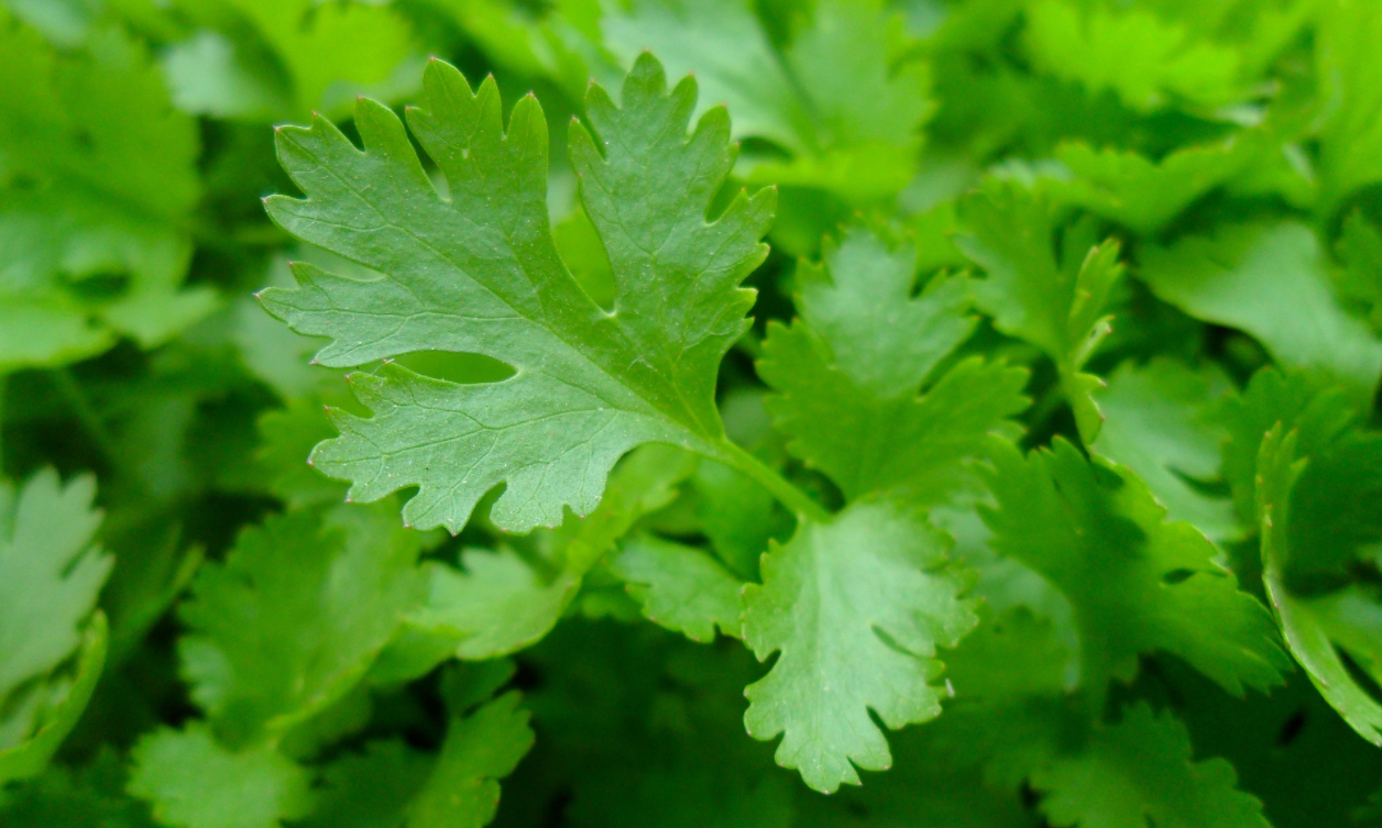 Parsley. Useful Properties and Applications