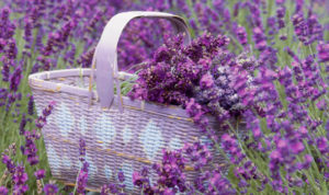 Use other oils in conjunction with lavender oil for optimal effect