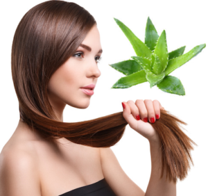 Aloe Vera can Strengthen Hair Growth