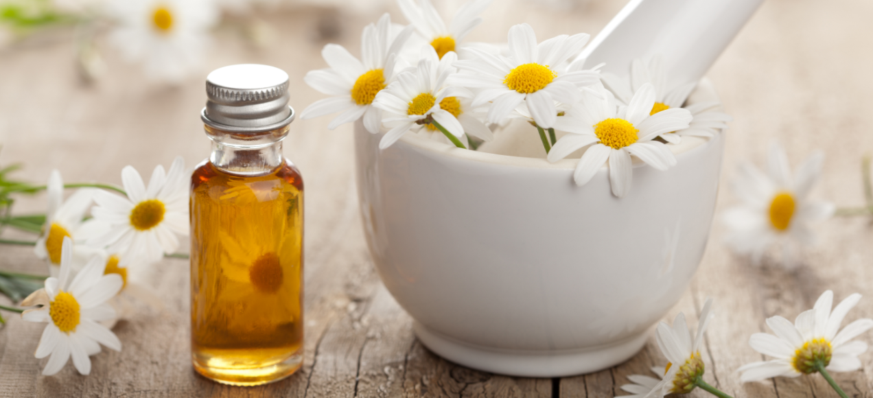 Health Benefits Of Chamomile Essential Oil Sweet Dreams