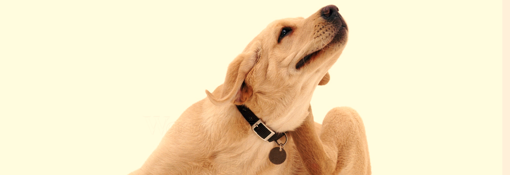 Natural Remedies Dog Itching Relief