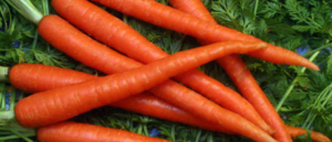 Carrots on greens.