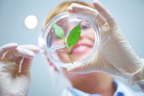 A smiling environmental scientist wearing gloves tests a plant specimen.