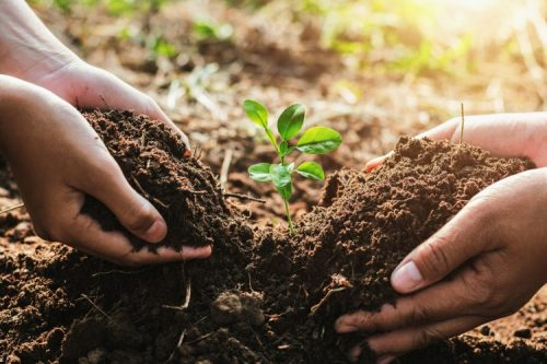 Two pairs of hands planting a seedling in soil