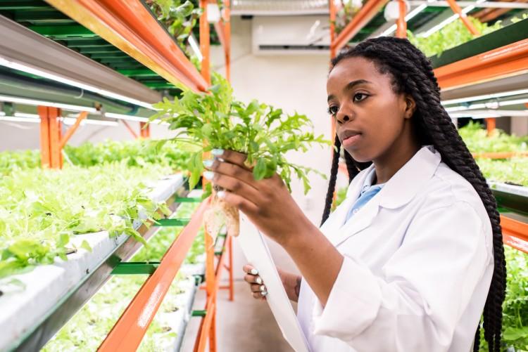An agronomist studies a plant specimen.