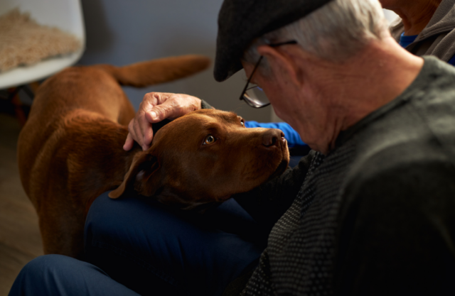 Older man viewed from behind, bending over to pet a brown dog