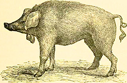 By Internet Archive Book Images [No restrictions], via Wikimedia Commons