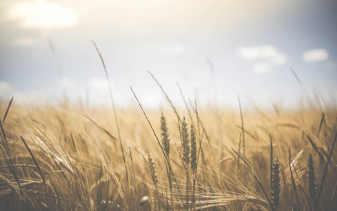 The Law of the Harvest: Planting Seeds of Faith