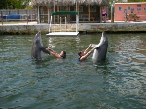 Key Largo dolphis