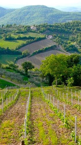 Villa Pia, Tuscany<br>Photo credit: Mike Reed
