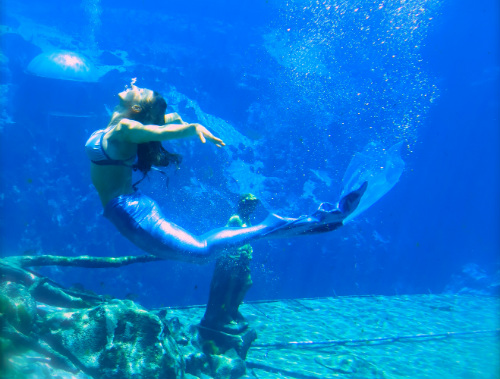 Mermaid Camp at Weeki Wachee Springs ©Julie Komenda