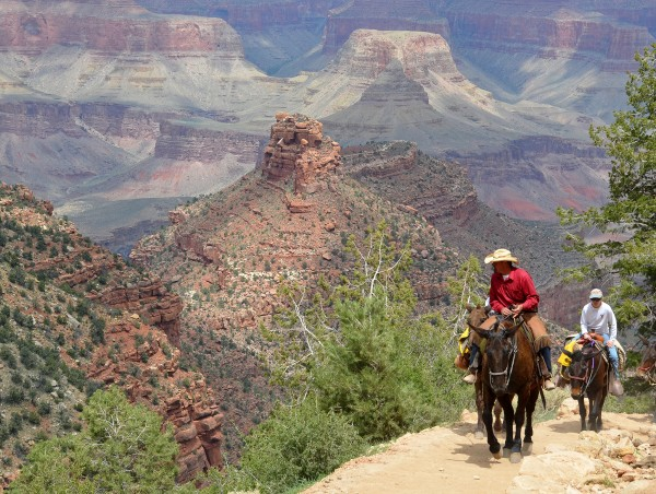 Grand Canyon mule ride. Photo credit: Michael Quinn.