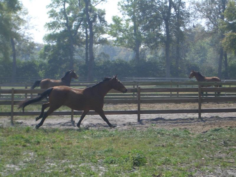 horse country-florida