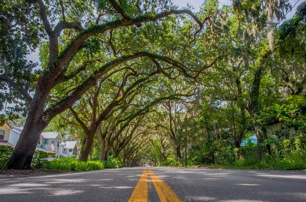 canopy roads florida