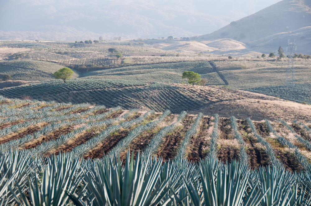 The beautiful place where tequila comes from | Orbitz