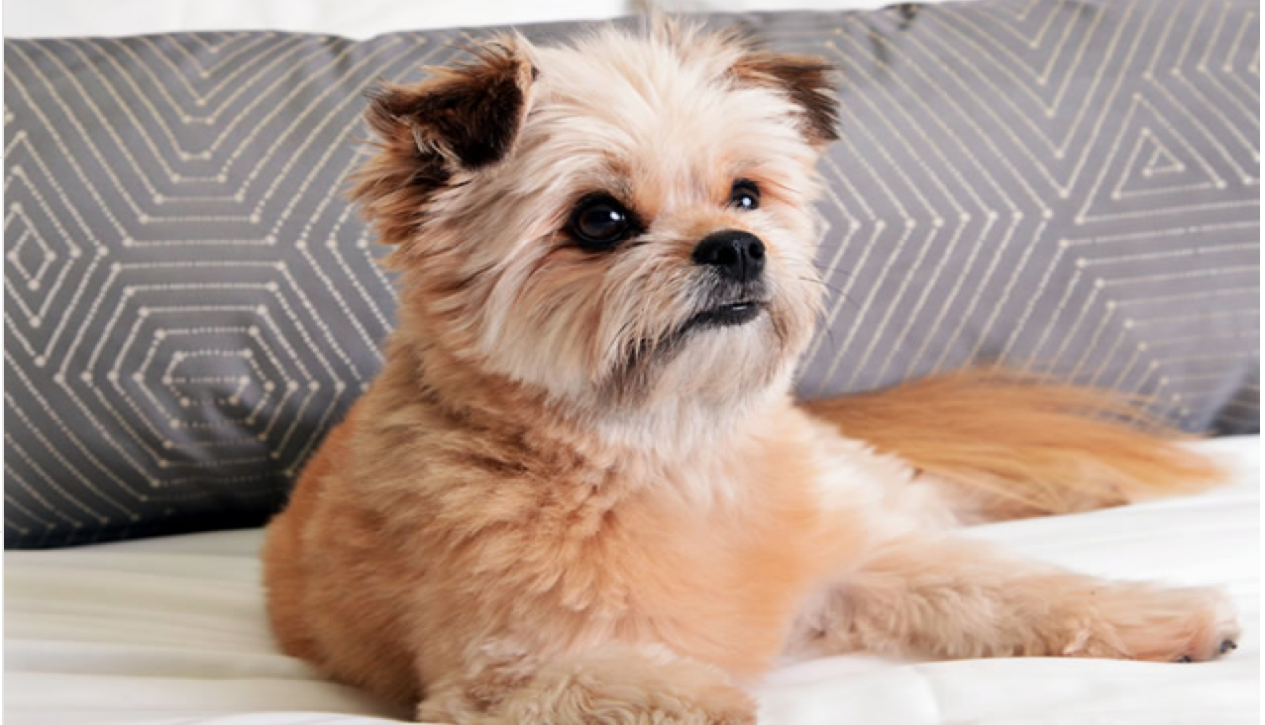The Delano Las Vegas Dog friendly suite