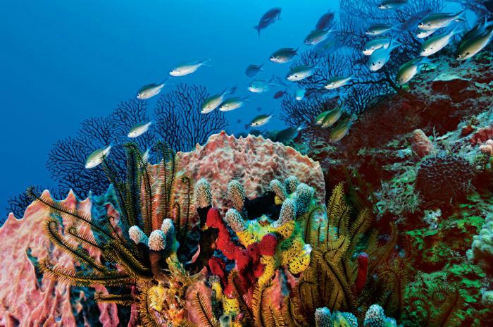 Scuba diving, St Lucia