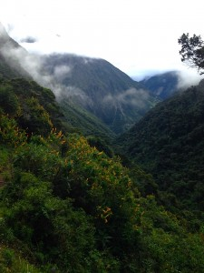 The Cloud Forest. Courtesy of Ally Marotti.