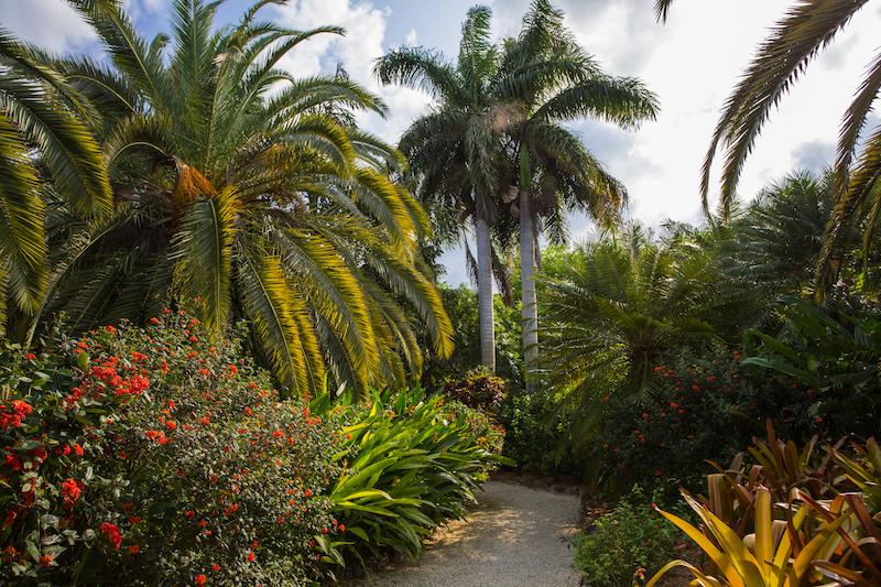 Queen Elizabeth II Botanic Park   PHOTO: Cayman Islands Department of Tourism