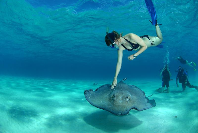 Stingray City   PHOTO: Cayman Islands Department of Tourism