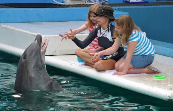 Clearwater Marine Aquarium. Source: Walter/Flickr Creative Commons.