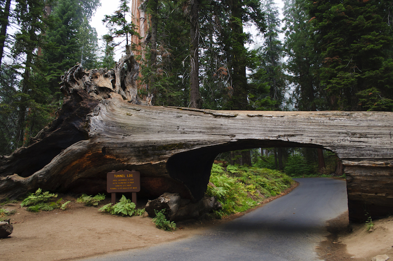 Tunnel Log in the Sequoia and Kings Canyon National Park