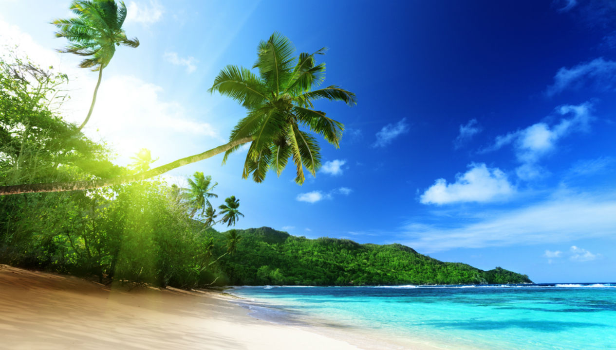 beach, vacation, tropical, palm trees, getaway, trip, travel