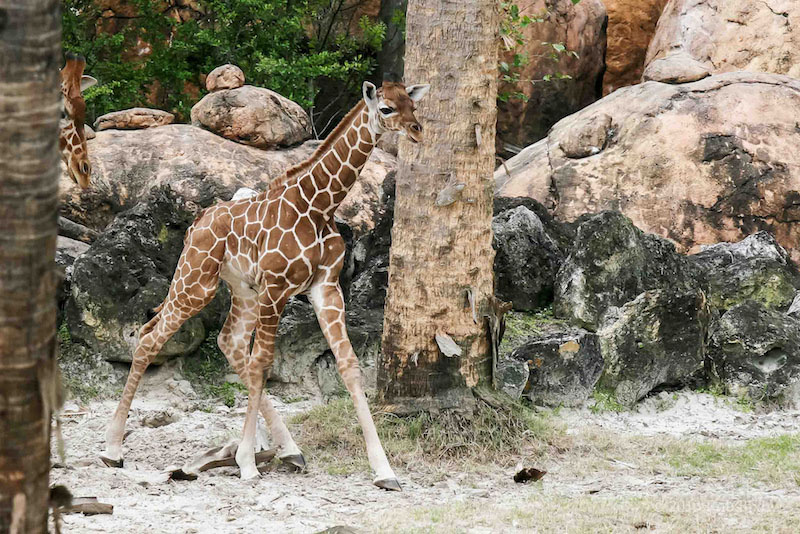 Visit the Jacksonville Zoo and Gardens