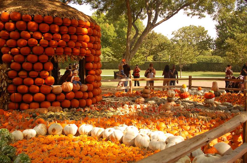 Pumpkin Village in Pecan Grove, Texas