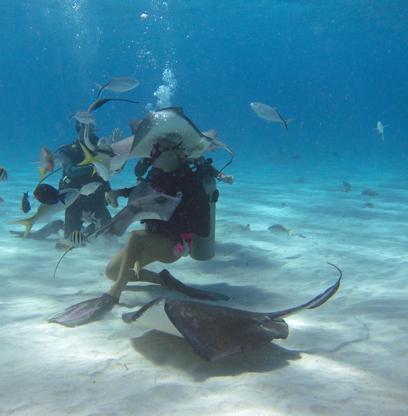 Stingray City-cayman islands