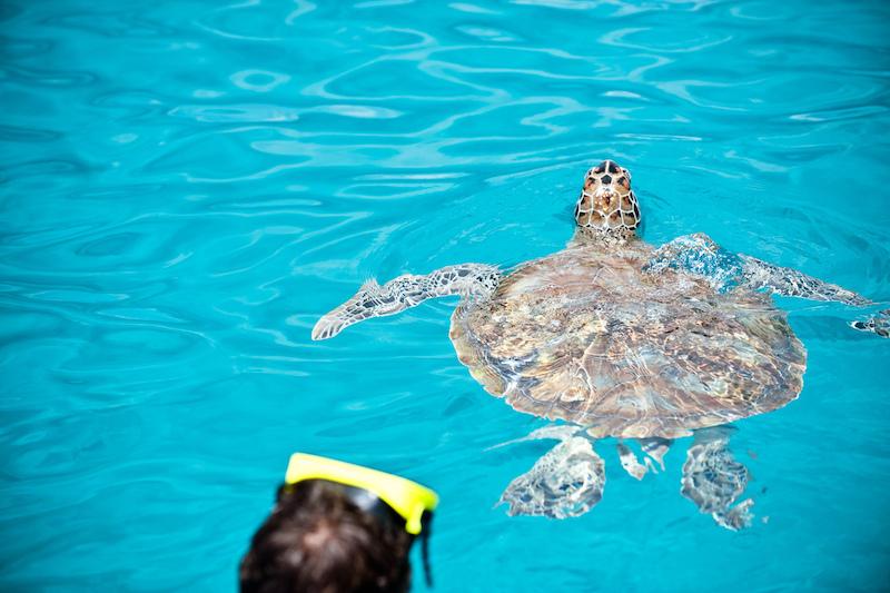 See the sea turtles