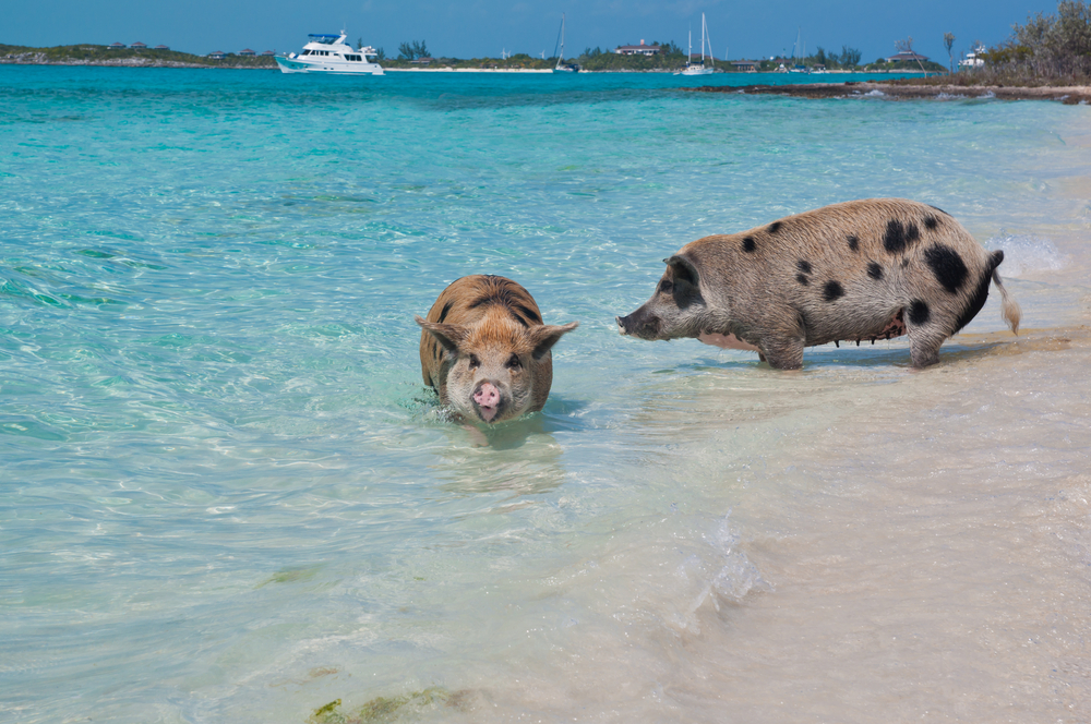 Taking Animals To Cayman Islands