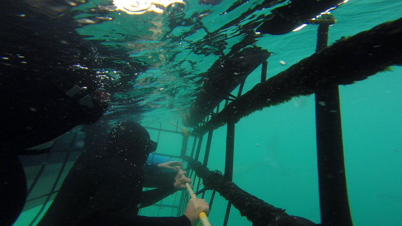 Orbitz-Shark Cage Diving South Africa -Getting Stamped-4