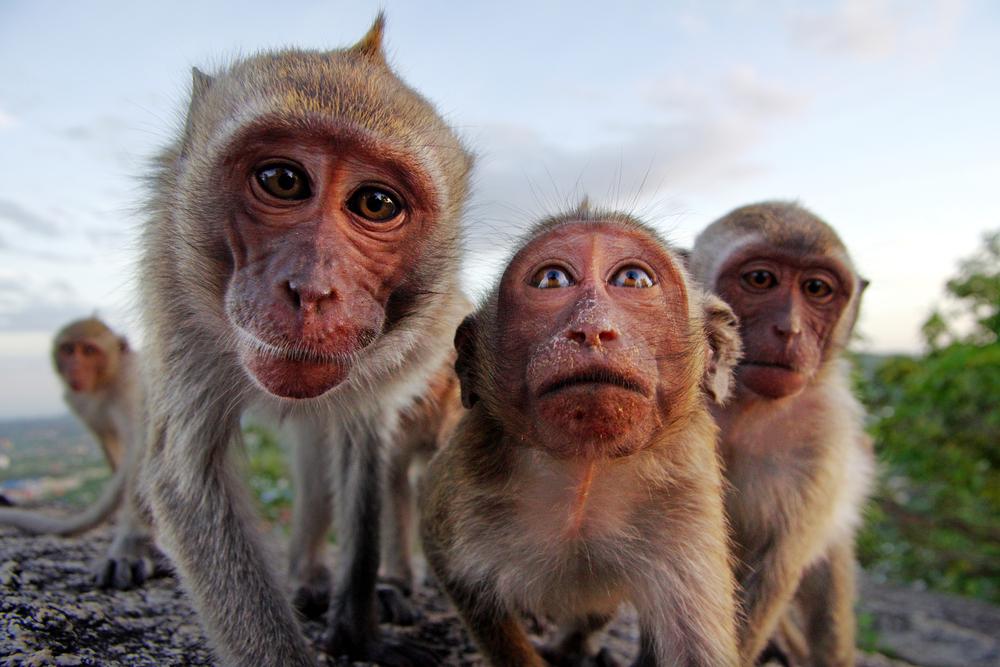 monkeys-in-bali