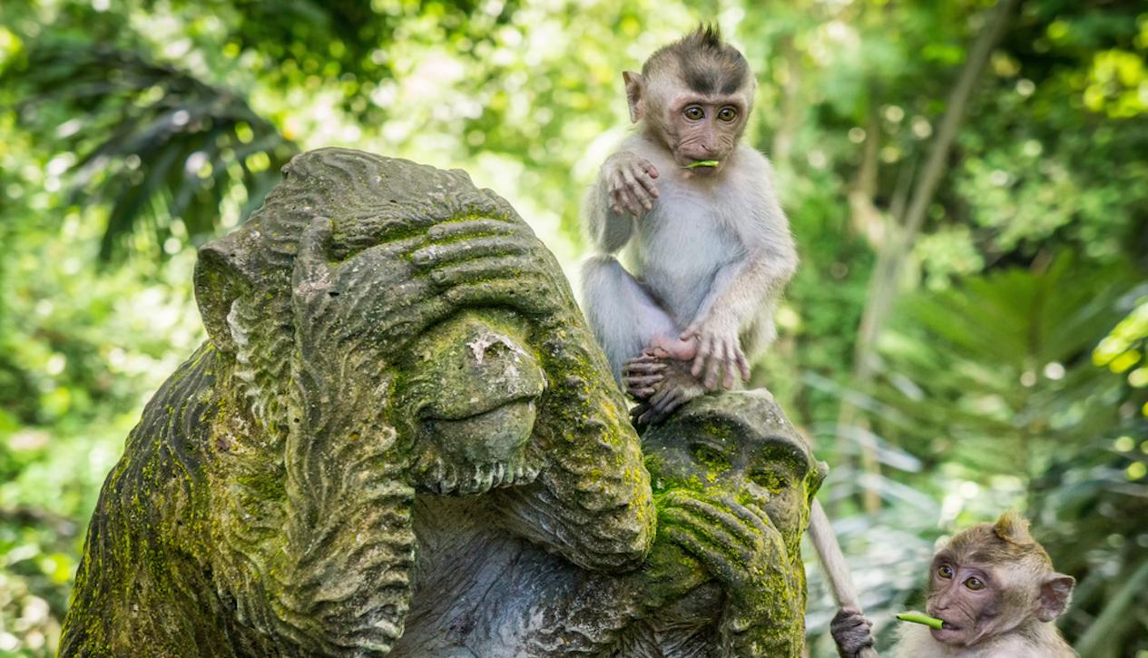 Sacred Moneky Forest in Ubud, Bali