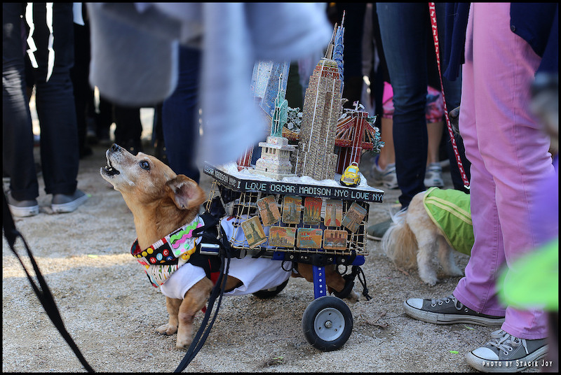 tompkins-square-halloween-dog-parade-nyc