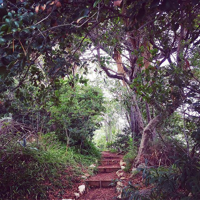 Amir's Garden
