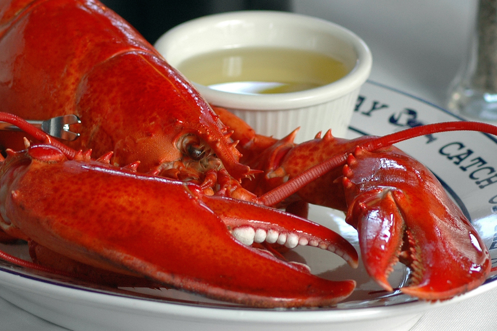Come out of your shell for some New England lobster. Credit the Lobster Guy.