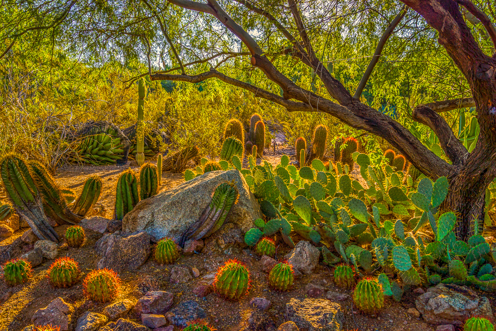 7 Botanical Gardens To Remind You That Spring Is Coming