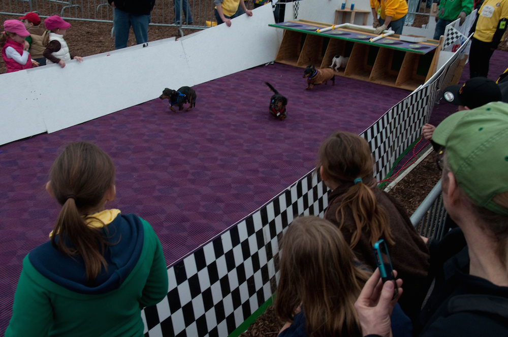 With its Beggin' Pet Parade and Weiner Dog Derby, St. Louis's Mardis Gras celebration has gone to the dogs. Credit Dave Herholz/Flickr.