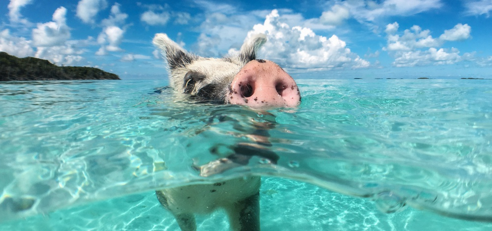 Which Bahamas island is your perfect match? | Orbitz