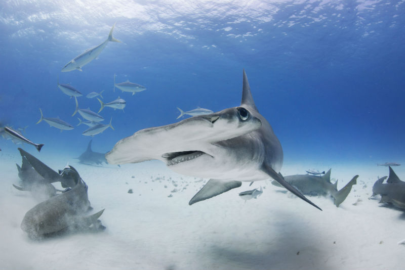 San Salvador, Bahamas, Caribbean, diving