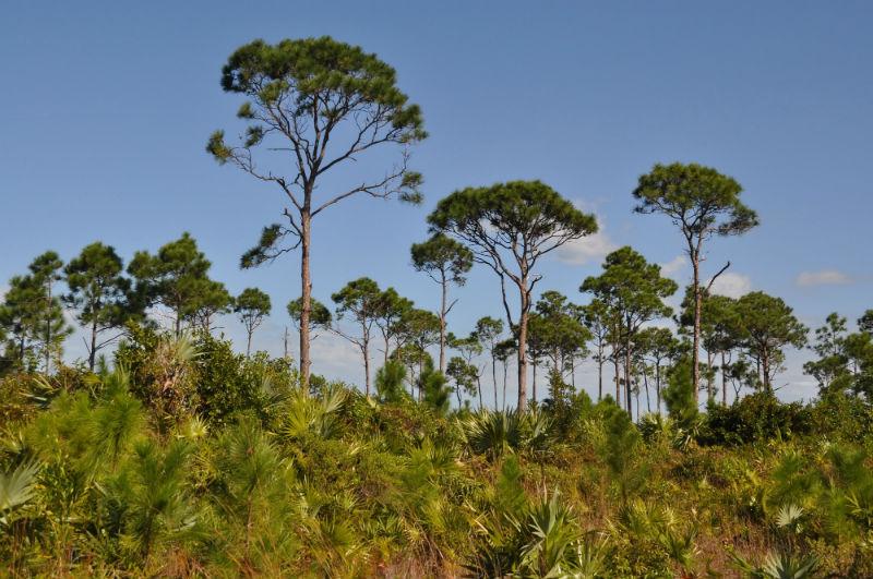 Lucaya National Park, Grand Bahama Island, Caribbean
