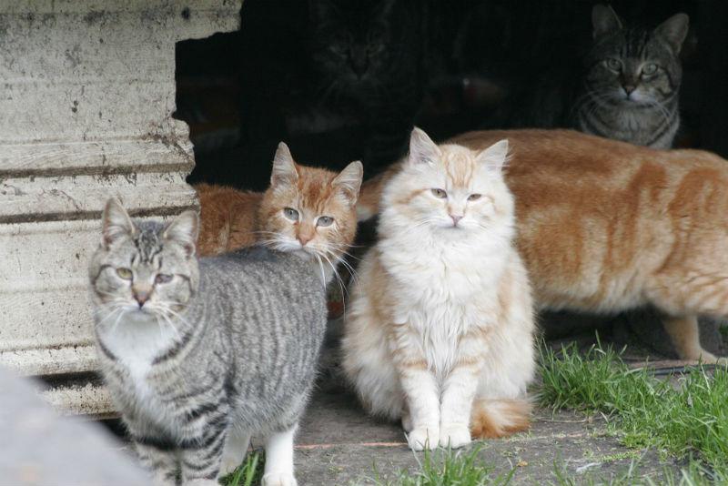 feral cats, Puerto Vallarta