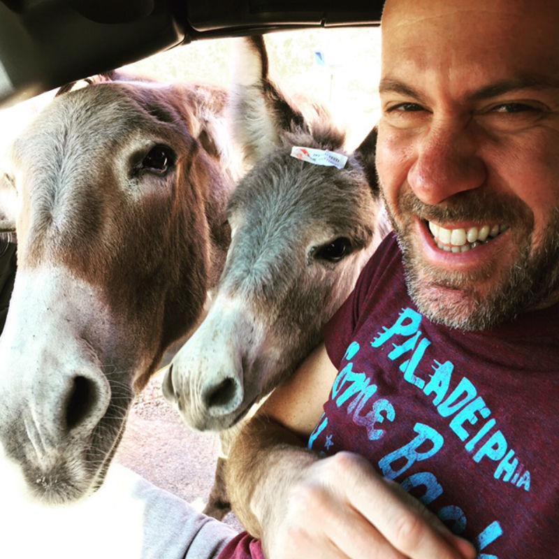 oatman, burros, arizona