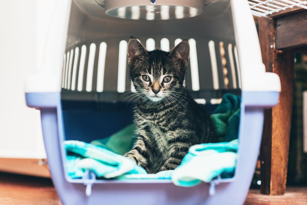 striped cat sitting in open crate