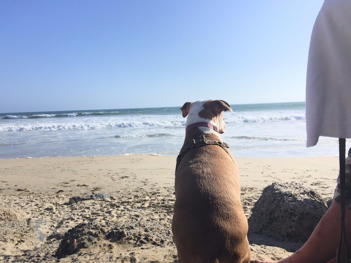 dog sitting in the sand at Huntington Beach California