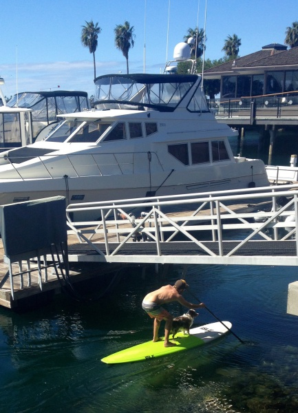 dog standing on a paddleboard with owner in san diego