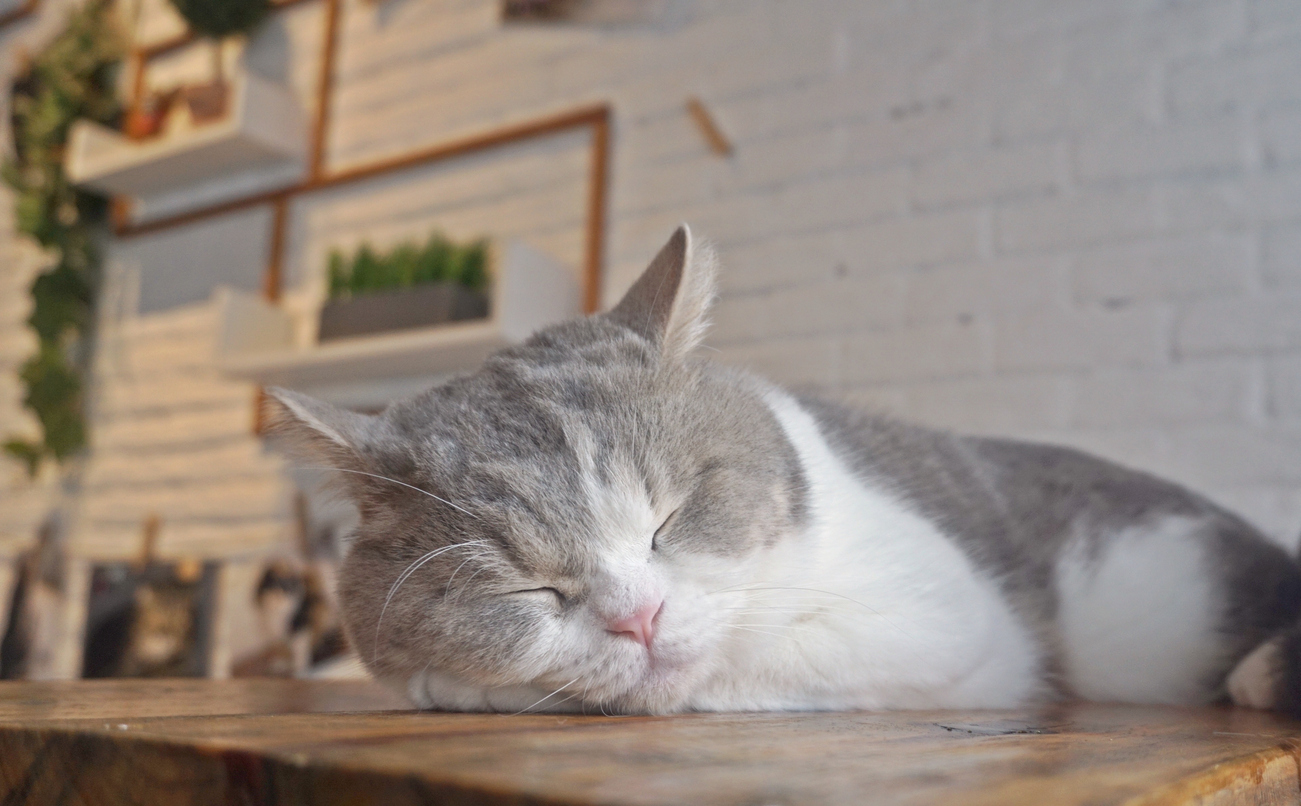 sleeping cat in a cafe