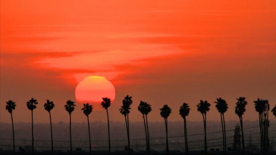palm trees, california, san bernardino
